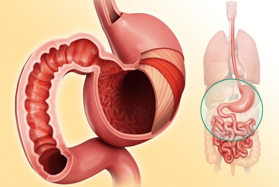 Nutrientes E Sistema Digestivo