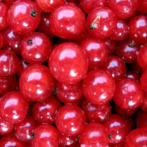 Mirtilos vermelhos docqman