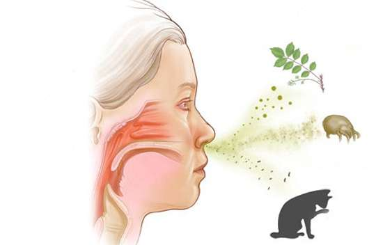 alergia a animal, cão, gato, cavalo,