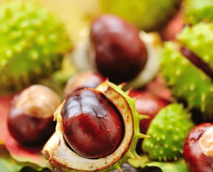 14 Benefícios Da Castanha Da Índia (Aesculus Hippocastanum)