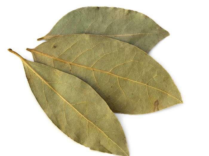 Louro – Benefícios, Propriedades e para que serve a folha de Louro