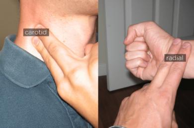 Aprenda A Medir A Frequência Cardíaca Através Do Pulso E Pescoço