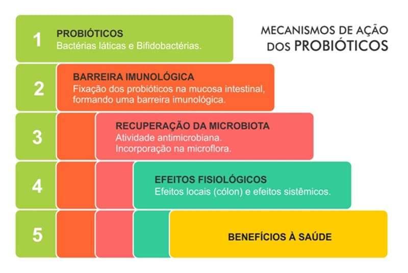 Probióticos (Lactobacillus)