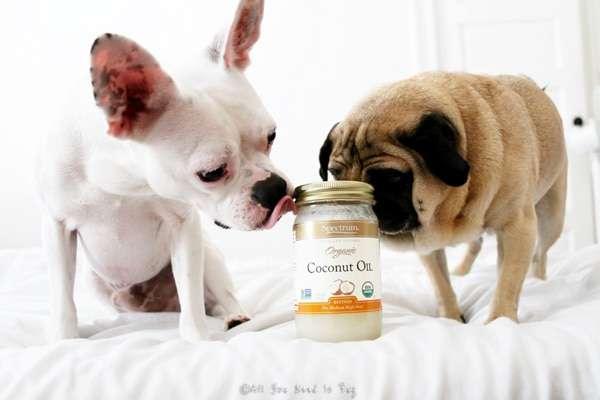 remedio-caseiro-para-alergias-e-coceira-de-cachorro