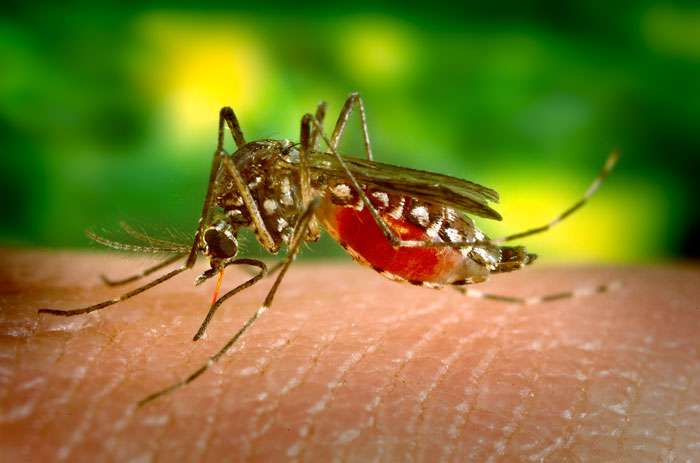 Febre Amarela (doença tropical grave)