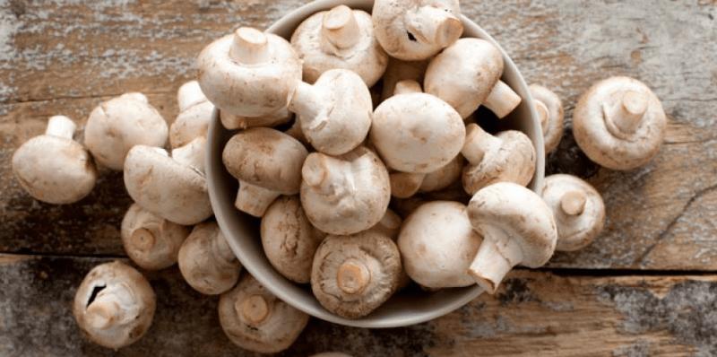 Os Cogumelos Oferecem Benefício Incríveis Para A Saúde