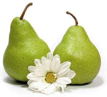 Pera – Propriedades, beneficios, vitaminas e calorias