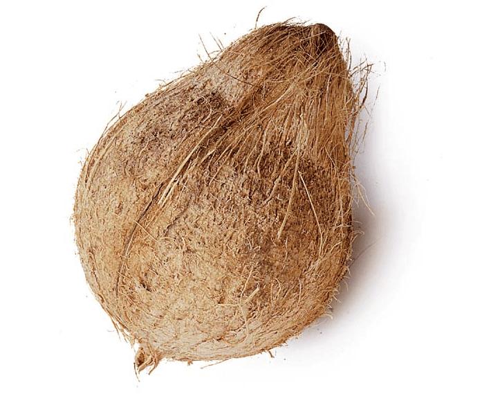 Coco (Cocos nucifera L.)
