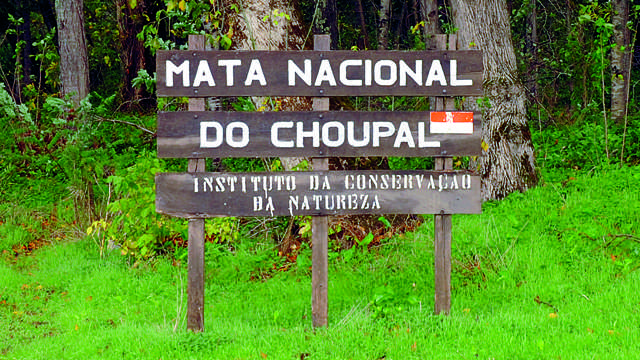 Mata Nacional do Choupal (Coimbra)
