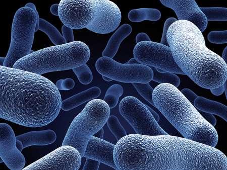 Lactobacilos Acidófilos para Infecção Vaginal