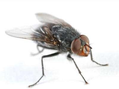 Dicas e Soluções para acabar com as moscas