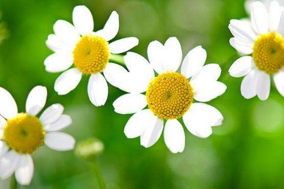 Banho Calmante: 9 Ervas Medicinais com Propriedades Relaxantes