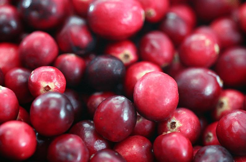 mirtilo vermelho, Oxicoco, cranberry