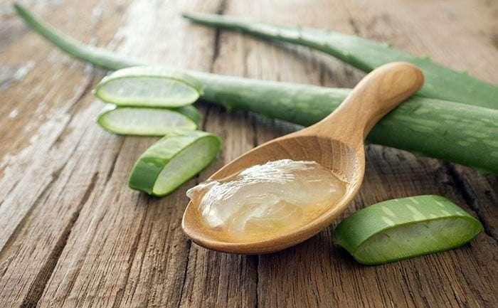 Gel de Aloe Vera – Beneficios, Planta, Cultivo