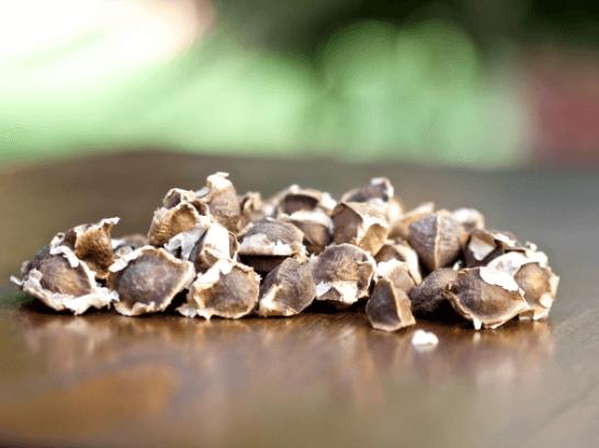 Sementes De Acácia Branca (Moringa Oleifera)