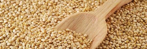 foto de quinoa