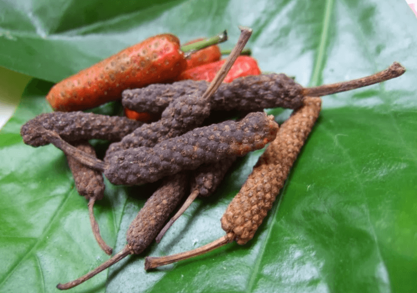 Pimenta Longa Bali (Piper Retrofractum) é Uma Fonte Rica Em Piperina