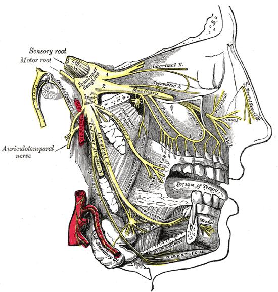 nervo trigêmeo a amarelo