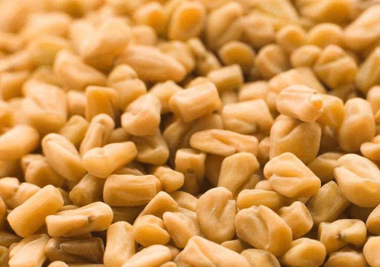 sementes de feno-grego, fenacho ou alforvas