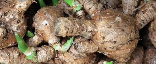 curcuma-comosa-roxb