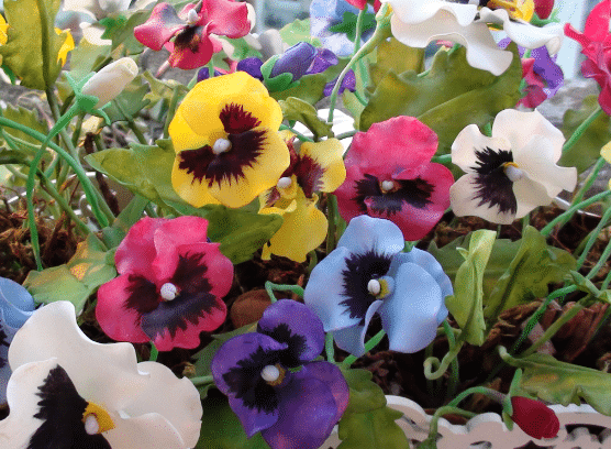 Viola (violeta, amor-perfeito)