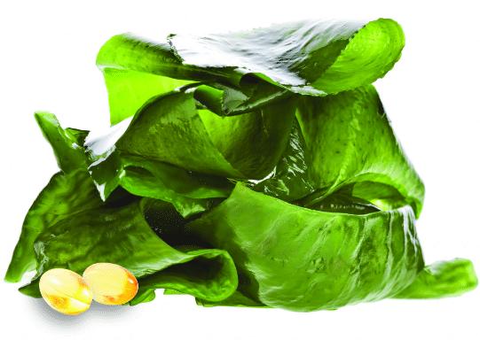 algas-marinhas