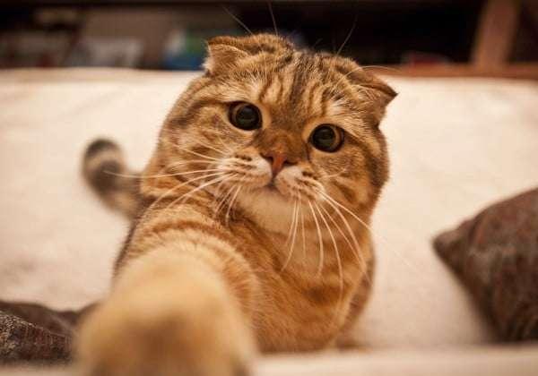 gato-travesso-problematico-indisciplinado