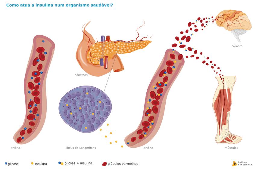 insulina-em-organismo-saudavel