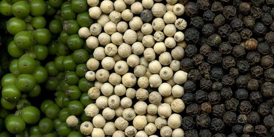 pimenta-preta (Piper nigrum)