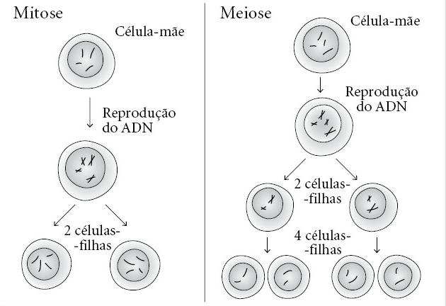 figura-3-mitose-e-meiose