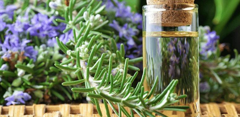 oleo-essencial-de-alecrim-rosmarinus-officinalis