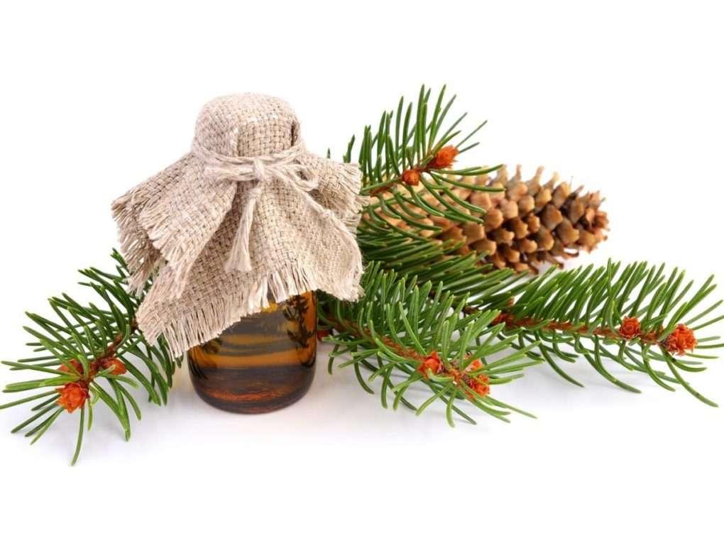 Óleo Essencial de Abeto: Combate o Câncer, Infecções e o Mau Odor Corporal