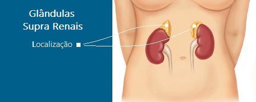Localização Das Glândulas Supra Renais
