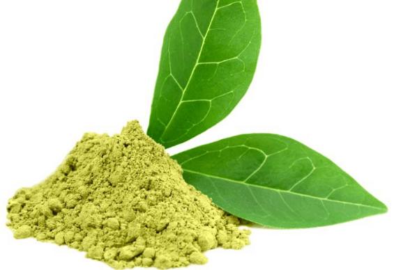 Extrato De Chá Verde (Camellia Sinensis)
