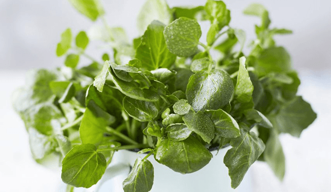 20 Vegetais e Frutas Ricos em Nutrientes e Pobres em Calorias