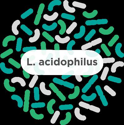 9 Benefícios Incríveis do Lactobacillus Acidophilus para a Saúde