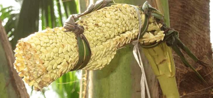 Como Fazer Açúcar De Coco