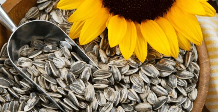 Sementes De Girassol Fazem Bem á Sua Saúde