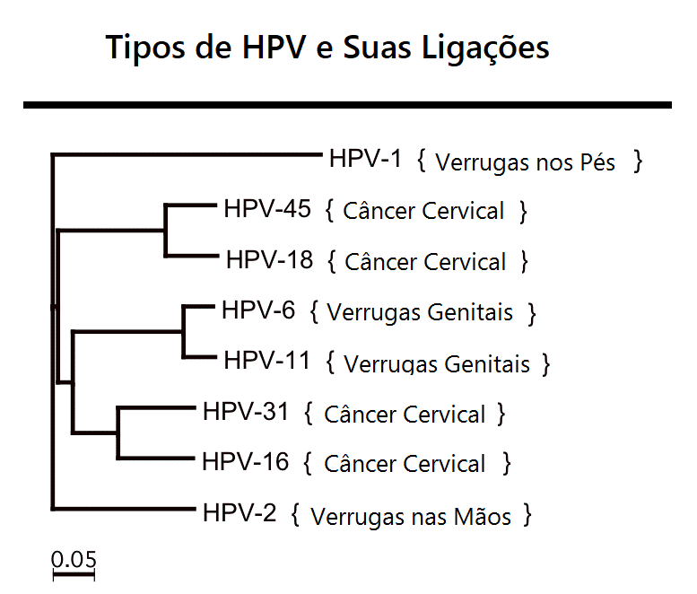 Tipos De HPV