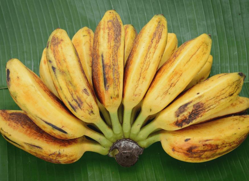 Banana Saba (Musa Acuminata × Balbisiana): Benefícios Para a Saúde e Informação Nutricional