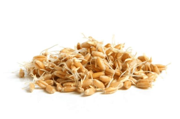 O Gérmen de Trigo Oferece Benefícios ao Intestino, Coração e aos Níveis de Açúcar no Sangue