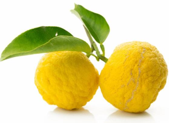 Cidra (Citrus Medica)