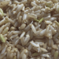 Arroz Integral Germinado