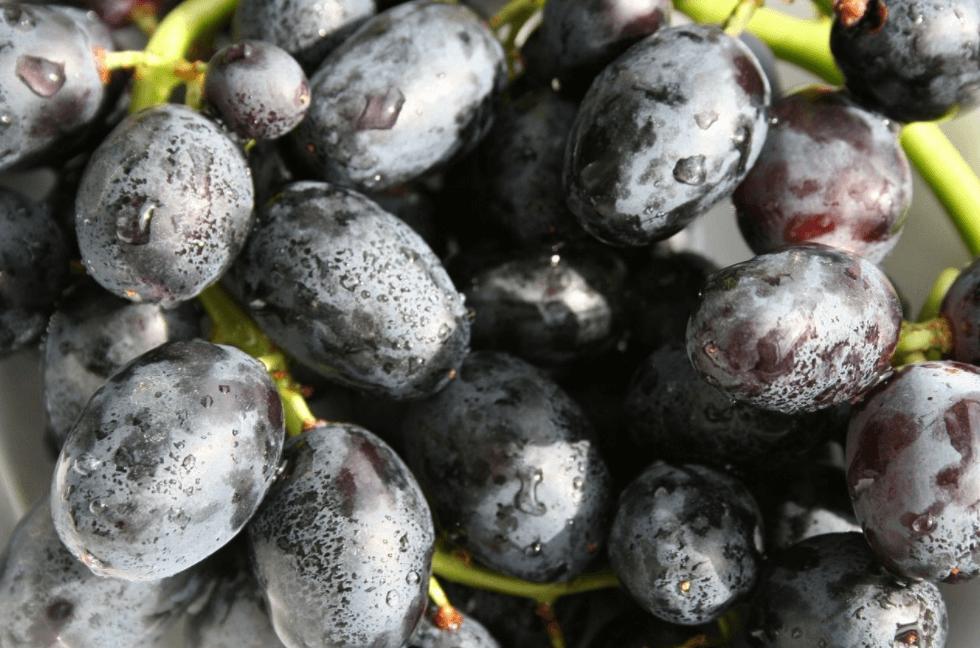 Suco de uva para prevenir o infarto