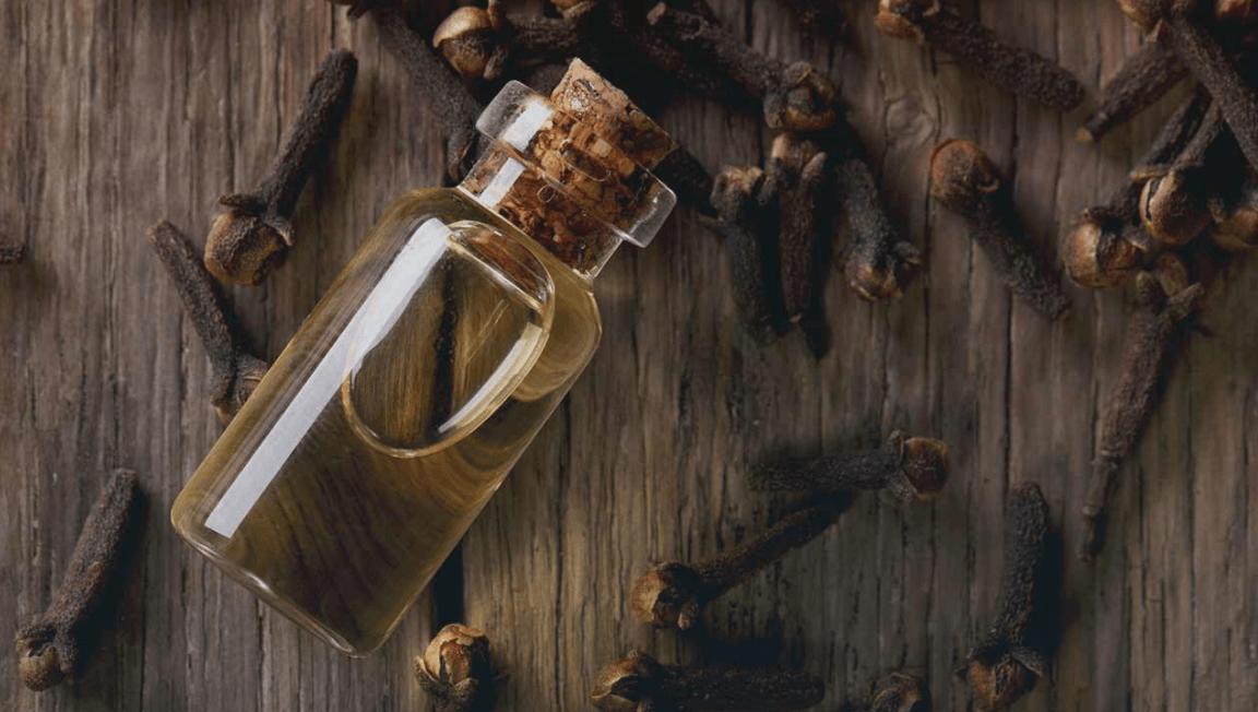 O óleo Essencial De Cravo Da India Pode Ser Usado No Tratamento E Alivio Das Crises De Asma