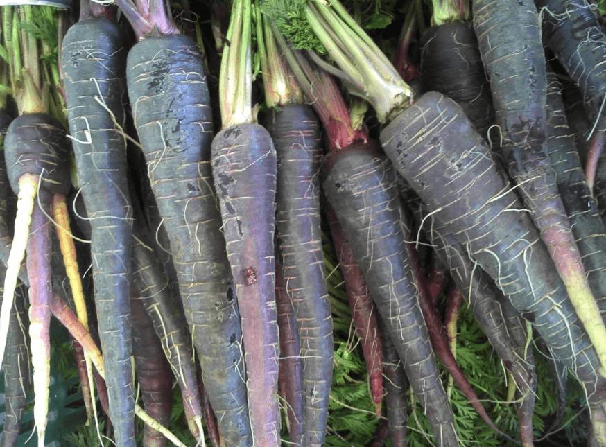 Cenoura Preta E Seus Benefícios Para A Saúde
