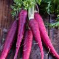 Os Benefícios Da Cenoura Roxa São Impressionantes
