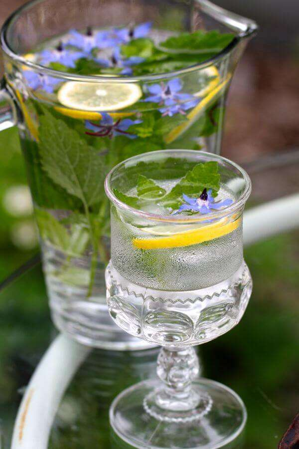 Chá De Borragem: 12 Benefícios na Saúde e no Alivio do Estresse