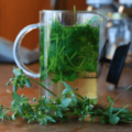 Conheça Os Benefícios Do Chá De Morugem, De Nome Científico Stellaria Media
