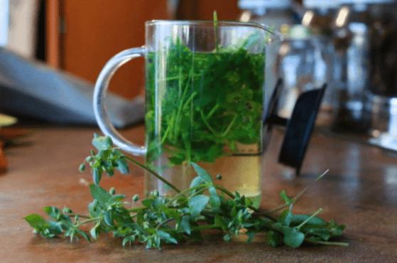 Chá de Morugem: 6 Benefícios Incríveis para a Saúde + Efeitos Colaterais